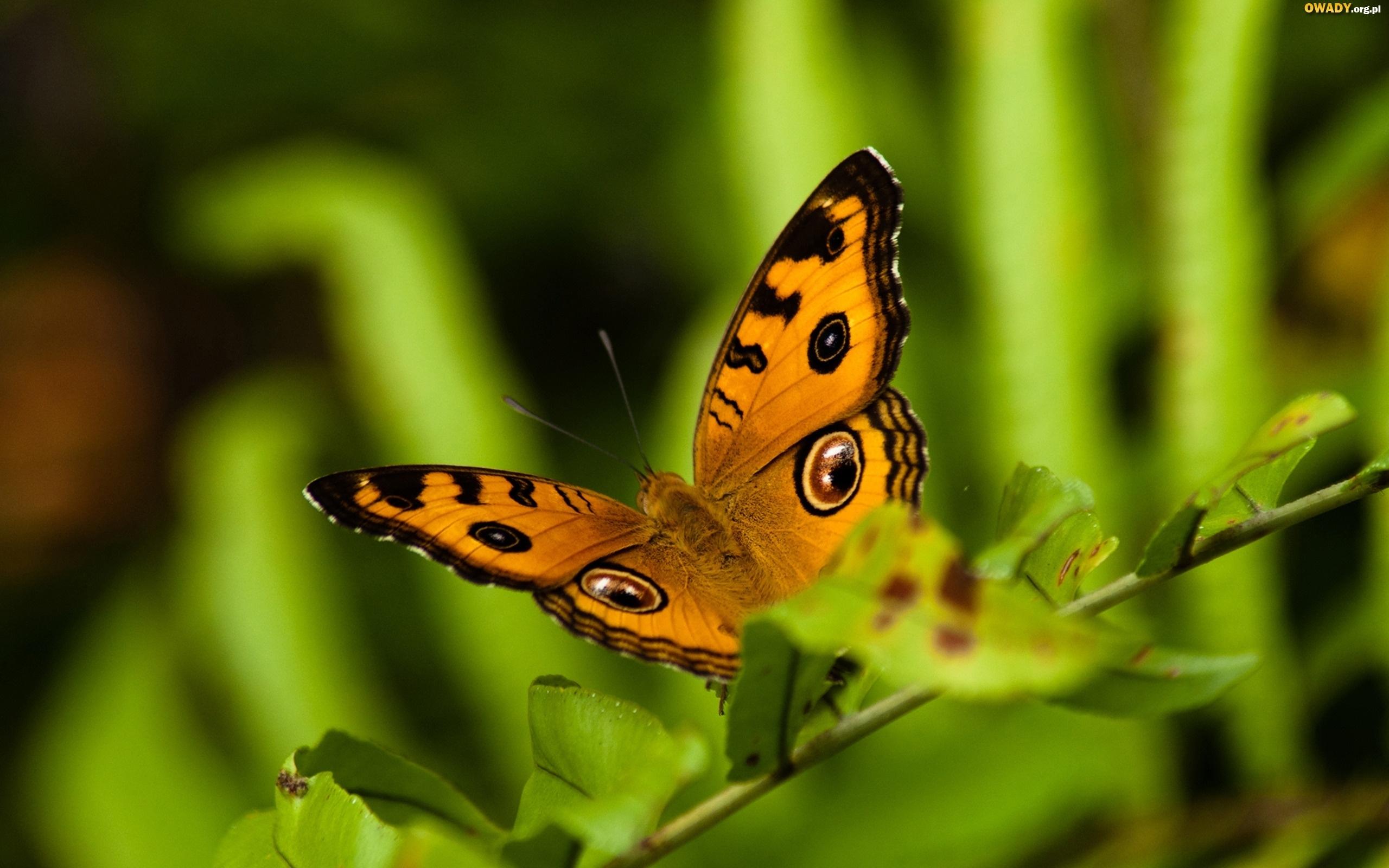 Motyl 8